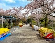 Il parco di Ueno così vuoto non si era mai visto
