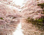 Anche lo storico Hirosaki Cherry Blossom Festival si arrende al virus