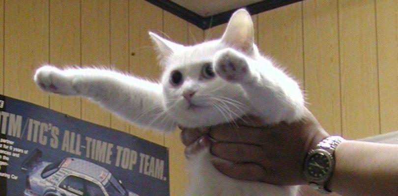 addio al longcat, la gatta Nobiko ci lascia a 18 anni