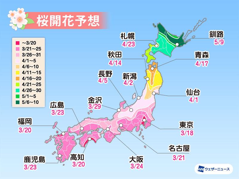 Giappone: ecco quando fioriranno i ciliegi nel 2021
